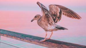 Превью обои чайка, птица, море, розовый, пастельный, поручни, пирс