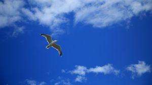 Превью обои чайка, птица, небо, полет, облака