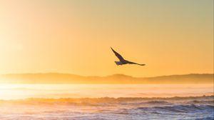 Превью обои чайка, птица, поле, туман, закат, море