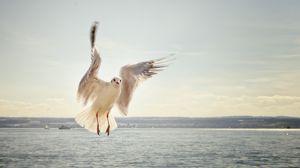 Превью обои чайка, птица, полет, море