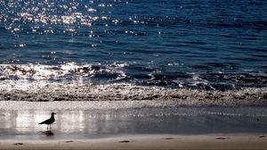 Превью обои чайка, море, закат, птица