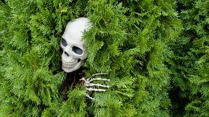 Превью обои череп, скелет, куст, забавный, хеллоуин