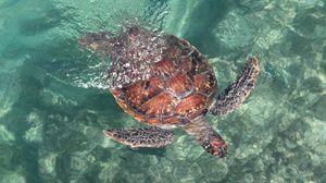 Превью обои черепаха, море, вода, плавать