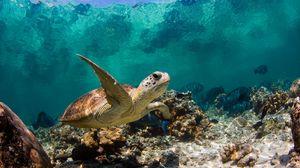 Превью обои черепаха, океан, вода, макро, рыбы, кораллы