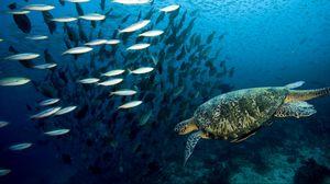 Превью обои черепаха, подводный мир, плавать, рыбы, море, океан
