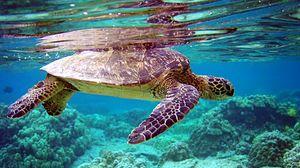 Превью обои черепаха, подводный мир, плавать, вода
