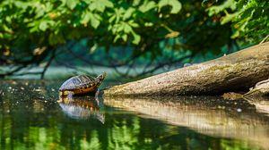 Превью обои черепаха, вода, бревно, отражение