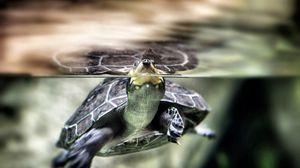 Превью обои черепаха, вода, плавать, панцирь