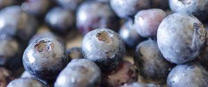 Превью обои черника, ягоды, фрукты, капли, макро