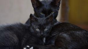 Превью обои черные коты, семья, котенок, взгляд