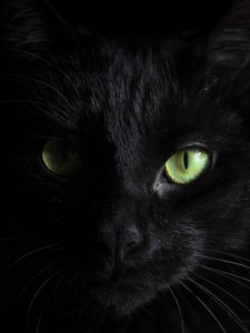Превью обои черный кот, морда, взгляд