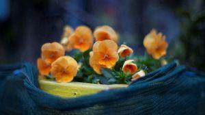Превью обои цвет, маленькие, листья, лепестки