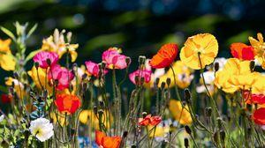 Превью обои цвет, поляна, яркий