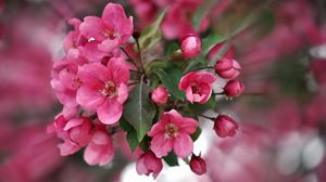 Превью обои цвет, розовый, лепестки, растение