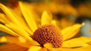 Превью обои цветок, жёлтый, лепестки, размытость