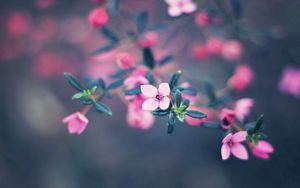 Превью обои цветы, цветение, размытость