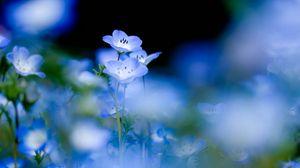 Превью обои цветы, цветение, синий