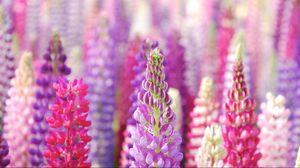 Превью обои цветы, красивые, лепестки