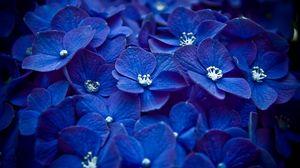 Превью обои цветы, синий, лепестки