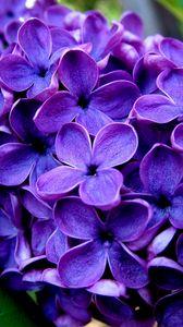 Превью обои цветы, синий, трава, сирень