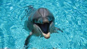 Превью обои дельфин, улыбка, вода, бассейн