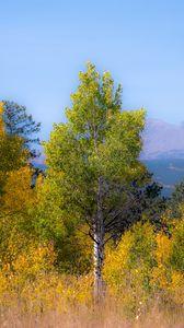 Превью обои деревья, лес, горы, вид сверху, природа, осень