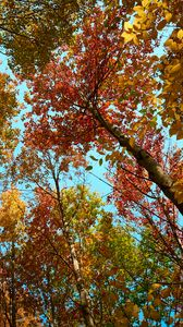 Превью обои деревья, лес, осень, вид снизу