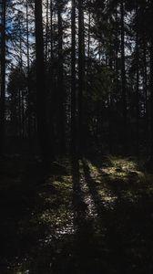 Превью обои деревья, лес, свет, природа, темный