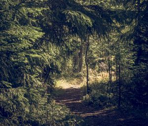 Превью обои деревья, лес, тропинка, природа, пейзаж