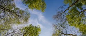 Превью обои деревья, небо, природа, вид снизу