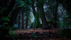 Превью обои деревья, осень, мох, листва, лес