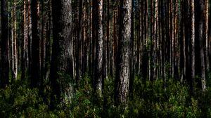 Превью обои деревья, природа, лес, пейзаж