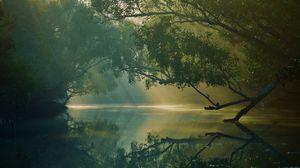 Превью обои деревья, река, отражение, лес, болото, сундарбан, бангладеш
