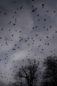 Превью обои деревья, силуэты, птицы, мрачный, темный