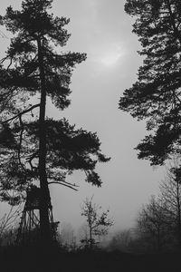 Превью обои деревья, силуэты, туман, мгла, черно-белый, темный