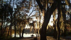 Превью обои дерево, ива, ветви, лавочка, пара, влюбленные, озеро, романтика
