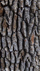 Превью обои дерево, кора, поверхность, шершавый, текстура