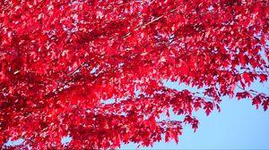 Превью обои дерево, листья, красный, осень