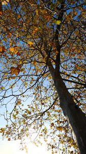 Превью обои дерево, листья, небо, осень