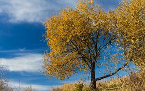 Превью обои дерево, листья, осень, природа, пейзаж