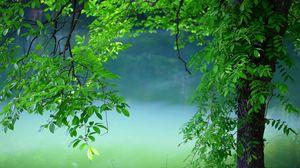 Превью обои дерево, листья, лето