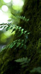 Превью обои дерево, листья, природа, макро