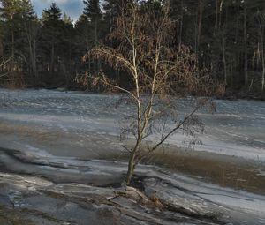 Превью обои дерево, побережье, река, лед, весна