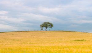 Превью обои дерево, поле, природа, минимализм