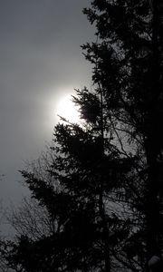 Превью обои дерево, силуэты, солнце, черно-белый, темный