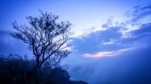 Превью обои дерево, туман, ветки, небо, облака