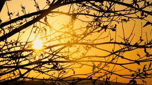 Превью обои дерево, ветки, солнце, закат, желтый