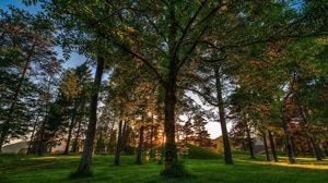 Превью обои деревья, трава, свет, тень