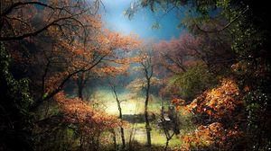 Превью обои деревья, туман, холм, газон, лес, восход