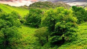 Превью обои деревья, зеленый, ярко, трава, лето, горы, рельеф, низина, ландшафт, небо